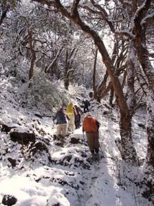 Climbing Through a Snowy Wonderland - Mike Litchfield